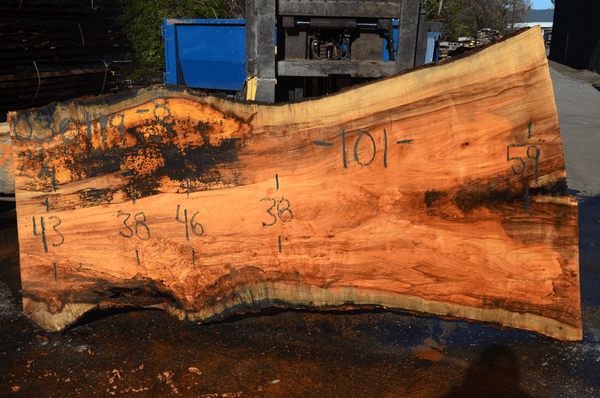 030119-08 Big Leaf Maple Slab