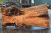 030119-09 Big Leaf Maple Slab