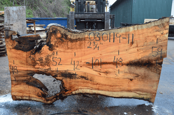 030119-11 Big Leaf Maple Slab