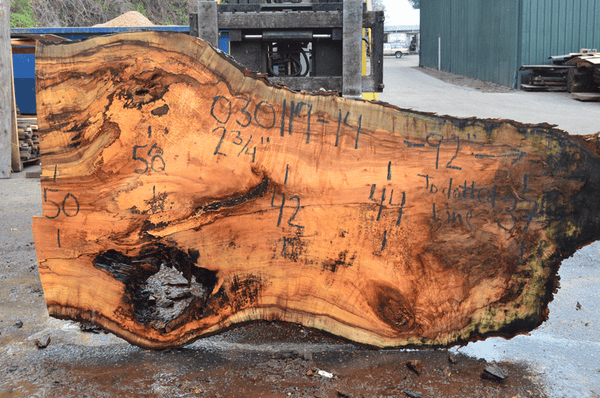 030119-14 Big Leaf Maple Slab
