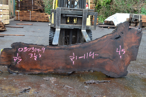 Oregon Black Walnut Slab 030314-09