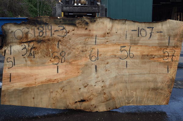 031819-03 Big Leaf Maple Slab
