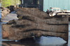 031819-08 Big Leaf Maple Slab