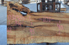 Big Leaf Maple Slab 031920-03