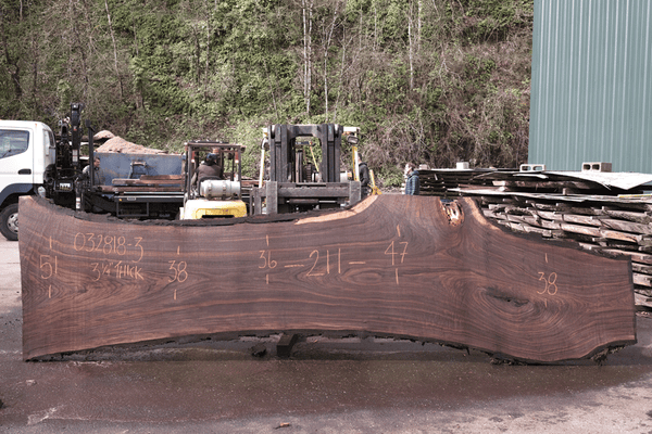 Oregon Black Walnut Slab 032818-03
