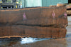 Oregon Black Walnut Slab 041017-04