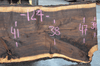 041519-08 Oregon Black Walnut Slab
