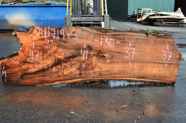 041719-05 Big Leaf Maple Slab