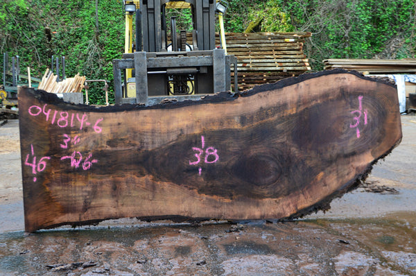 Oregon Black Walnut Slab 041814-06