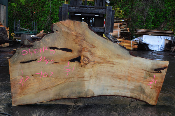 Big Leaf Maple Slab 042114-02