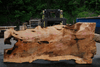 Big Leaf Maple Slab 042418-06