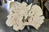 Maple Burl 050119-12