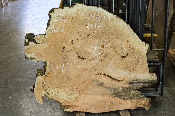 Maple Burl 050119-17