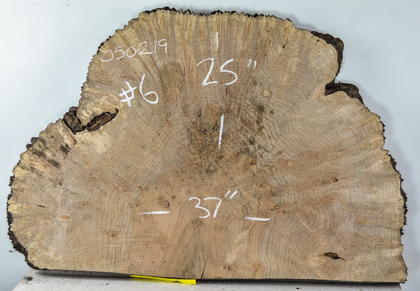 Maple Burl 050219-6