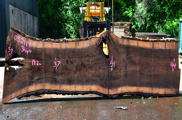 Oregon Black Walnut Slab 052114-07