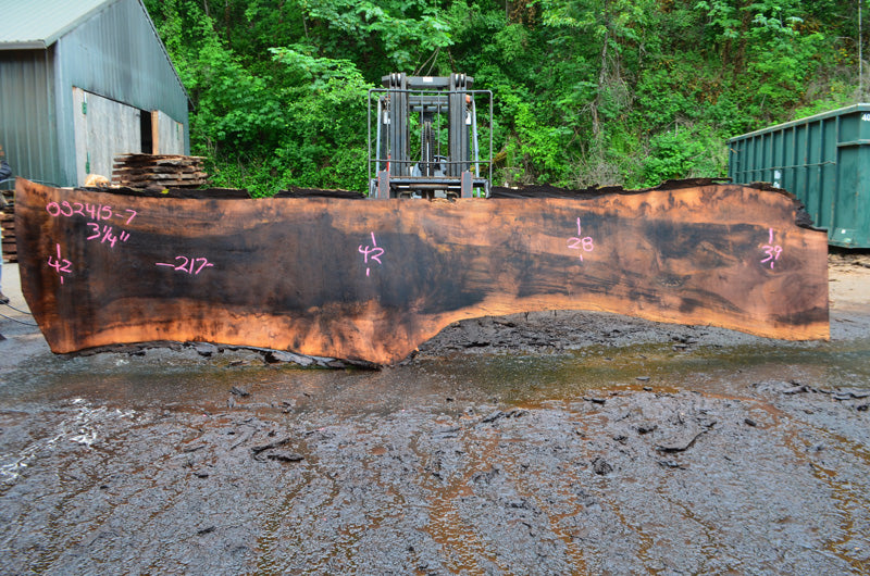 Oregon Black Walnut Slab 052415-07