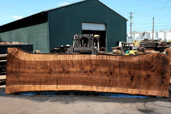 Oregon Black Walnut Slab 052418-06