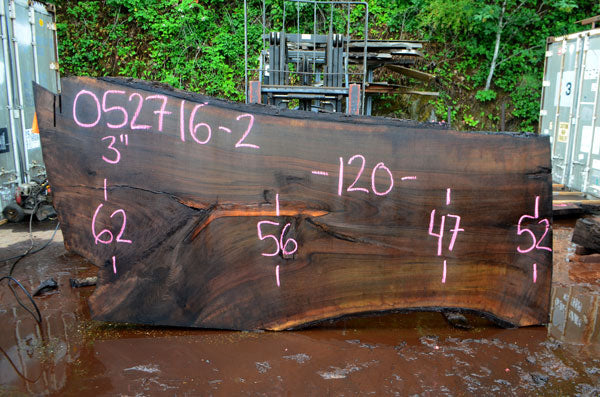 Oregon Black Walnut Slab 052716-02