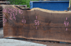 062519-10 Oregon Black Walnut Slab
