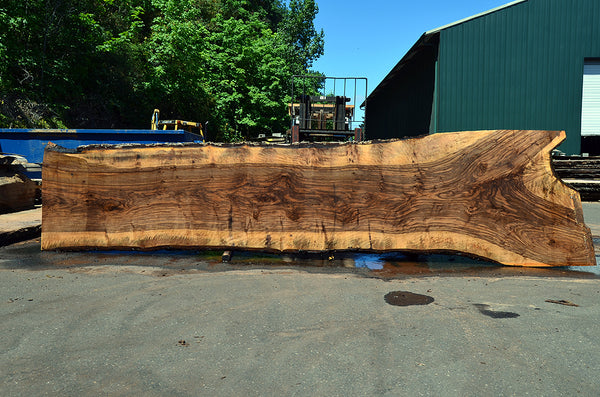 Bastogne Walnut Slab 072217-10