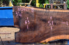 Oregon Black Walnut Slab 072417-08