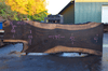 Oregon Black Walnut Slab 102317-08