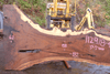 112918-04 Oregon Black Walnut Slab