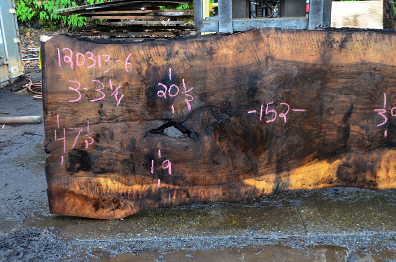 Oregon Black Walnut Slab 120313-06