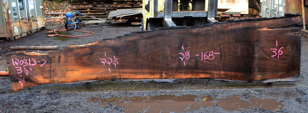 Oregon Black Walnut Slab 120313-07