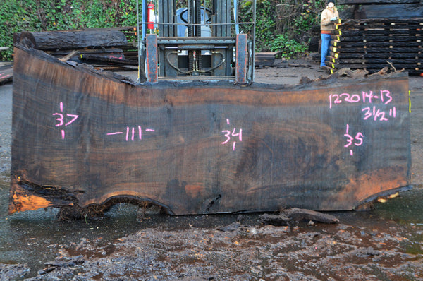Oregon Black Walnut Slab 122014-13