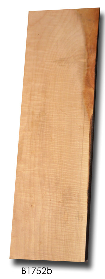 Big Leaf Maple Board B1752