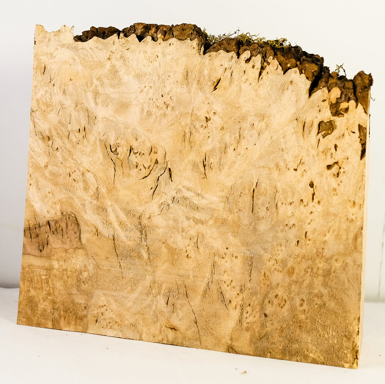 Big Leaf Maple Burl MB-6