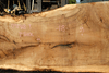 Oregon White Oak Slab 091918-02
