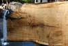 Oregon White Oak Slab 091918-05