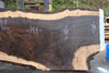 Oregon Black Walnut 100318-07