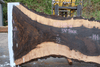 Oregon Black Walnut 100318-06