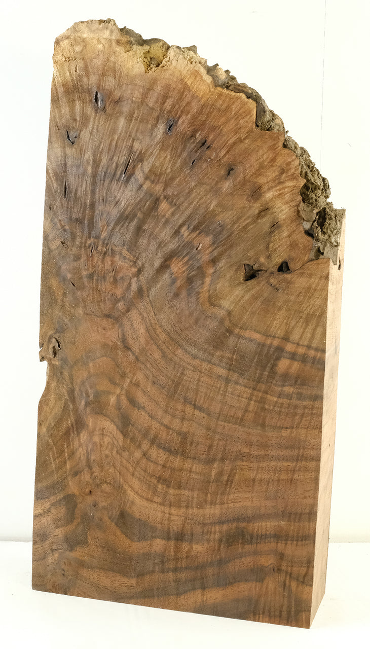 Walnut Burl WB-40