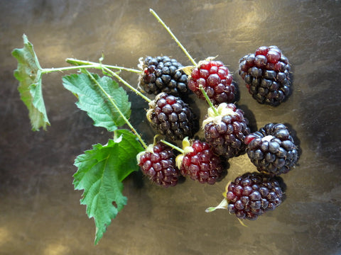 Organic Mulberries from my urban farm