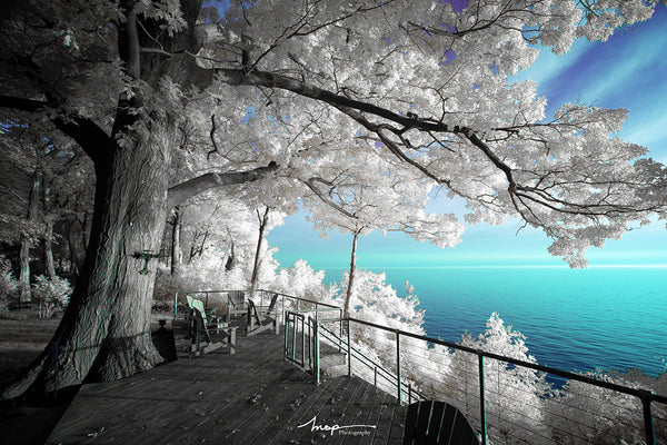 Cokin Color Infrared Photography