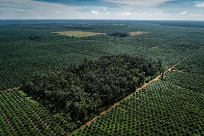 We've ditched palm oil for good, and here's why!