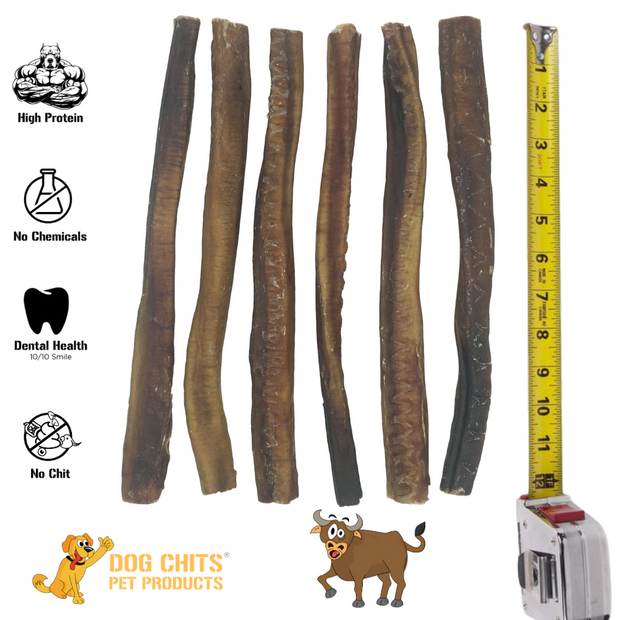 Dog Chits Bully Sticks | 12 inch | Odorless | Made in USA | USA Livestock |All Natural | Grass-Fed | Great for Dogs and Puppies | Long Lasting Chew | Fully Digestible | High Protein