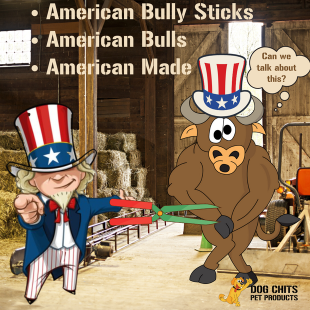 Dog Chits Bully Sticks | 6 inch | Odorless | Made in USA | USA Livestock |All Natural | Grass-Fed | Great for Dogs and Puppies | Long Lasting Chew | Fully Digestible | High Protein