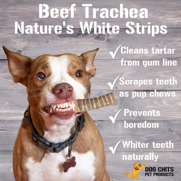 Beef Trachea for Dogs - Dog and Puppy Chews | Amazing for Joints | 1 Pound | Made in USA | All-Natural Treats | Large and Small Dogs | Nothing Added | Hardwood Smoked