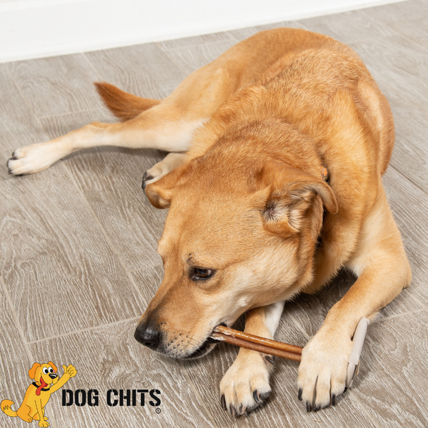 Dog Chits Bully Sticks | 25 Count | 5 inch | Odorless | All Natural | Grass-Fed | Great for Dogs and Puppies | Long Lasting Chew | Fully Digestible | High Protein