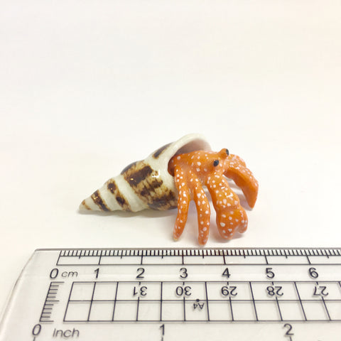 Miniature Hermit Crab