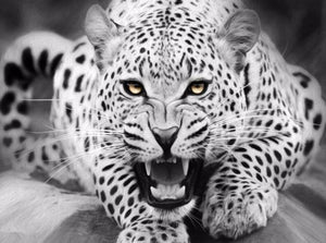 Black and White Leopard - PicArtSo™ Paint-by-Number Kit