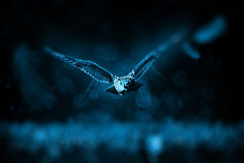 night owl flying