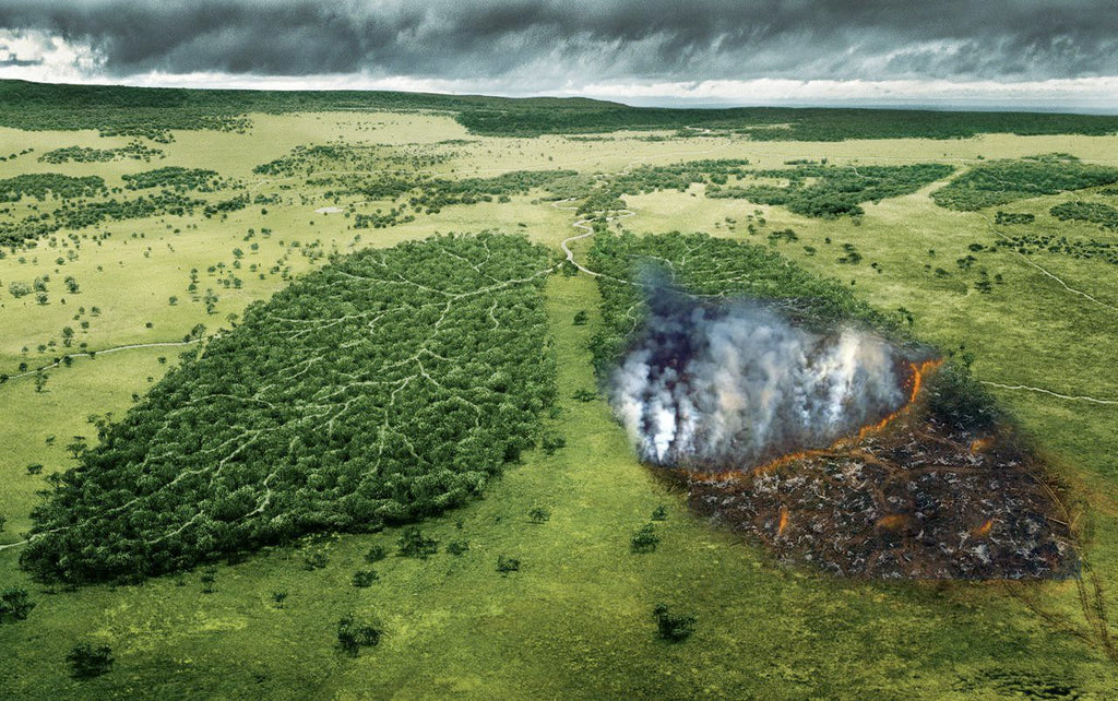 amazon lungs of the earth