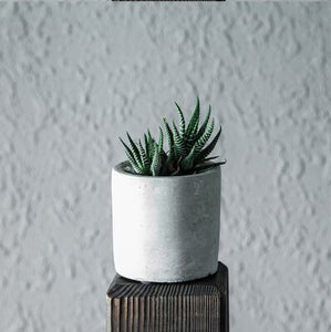 Concrete Geometric Flower Pot