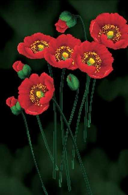 Red Poppies on Black Printed Cross Stitch Kit by Needleart World